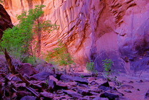 Neon Canyon Wall